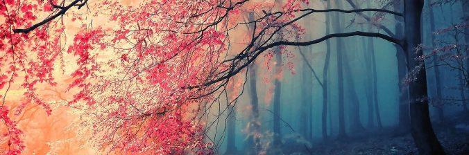 cropped-blossom.jpeg